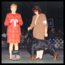 Cooper at the International K.C. of Chicago taking Winners Dog on Feb. 27th, 1999, handled by Ms. Holley Eldred, under Breeder-Judge Mrs. Catherine M. Thompson of Von Gailingen Rottweilers