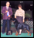 Cooper at Packerland K.C. taking Winners Dog in May of 1999, handled by Ms. Holley Eldred