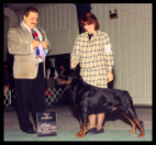 Cooper at the Waukesha K.C. in Wisconsin, taking Winners Dog & Best of Winners on Feb. 20th, 1999, handled by Ms. Holley Eldred, under Breeder-Judge Mr. Josef Hedl