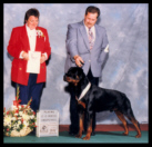 Cooper at the 1996 Colonial Rottweiler Club (CRC) Specialty in the 12-15 month dog sweepstakes class taking a 4th place, handled by Mr. Rodger Freeman, under Breeder-Judge Victoria Weaver of Gamegards Rottweilers