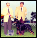 Cooper at the Cudahy K.C. taking Winners Dog & Best of Opposite Sex on August 9th, 1997 handled by Mr. Rodger Freeman