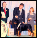 Cooper at the 1995 Medallion Rottweiler Club (MRC) Specialty in the 6-9 month puppy dog class taking a 4th place, handled by Mr. Rodger Freeman, under Judge Dr. Sam F. Burke, Jr.