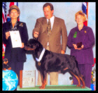 Cooper at the 1997 Medallion Rottweiler Club (MRC) Specialty following The International Federation of Rottweiler Friends (IFR) Specialty held in Chicago, IL. U.S.A. He was shown in the Open dog class taking a 4th place, handled by Mr. Rodger Freeman, under Breeder-Judge Mrs. Betty Leininger