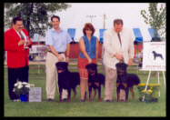 "Cooper shown at the St. Croix Valley Combined Specialties in MN. He is 2000 North Star Rottweiler Club Specialty Stud Dog Winner with his two sons ""Kody"" & ""Jr"", handlers: Mr. Perry Pason, Ms. Holley Eldred, & Mr. Rodger Freeman, under Breeder-Judge Mr. Josef Hedl"
