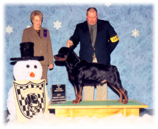 Multi-V Rated, A/C Ch. RH's Billion Dollar Baker Baby, CD, 2000 NSRC Stud Dog Winner. Cooper shown at the Indy Winter Classic Indepedent Specialty Shows. He is 2003 Hoosier Rottweiler Club Specialty Best in Veteran Sweepstakes Winner, handled by Mr. Rodger Freeman, under Breeder-Judge Ms. Carol Laskey.