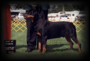 Best of Winners / Winners Dog at Burlington KC in July of 92'