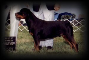 Best of Winners / Winners Dog at Chain O'Lakes KC in June of 92'