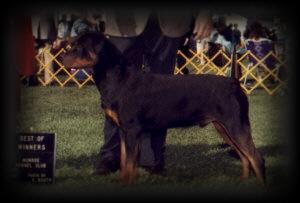 Best of Winners / Winners Dog at Monroe KC in September of 91'