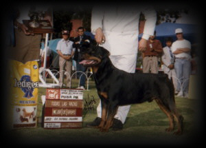Ditto winning a Group1 and Reserve Best in Show in Mexico
