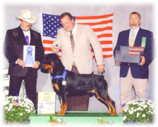 "Am/Can Ch. Von Baker's Like A Rolling Stone, Group Placer, Multi-BOB winner - ""Dylan"""
