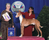 """Eclipse"" and Lynette, finishing off the year with a bang, at the 7th AKC/Eukanuba National Championship taking the BOB win, on 12/1/07, under judge Ms. Joy S. Brewster, in Long Beach, CA."