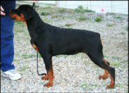 """Gretta"" ~ Wildhaven's Money Can't Buy Me Love v Baker - 5 months old"