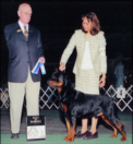 """""""Gotham"""" taking BOW/WD for his 1st pts. at Genesee Co. K.C., handled by Lynette Lomason"""