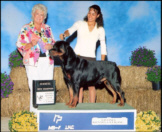 """""""Gotham"""" New Champion on 9-3-06, taking WD at Livonia KC, handled by Lynette Lomason"""
