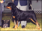 Gus and Rodger Freeman winning Best of Breed, at The Battle Creek K.C., on May 31, 1999