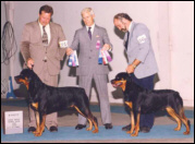 "Gus on the left, handled by Rodger Freeman, taking Winners Dog & Best of Winners - Gus' sister ""Marlowe"" (BOSS Ch. Von Baker's Sweetest Taboo, top 10) is on the right, taking Winners & Best of Opposite Sex"