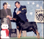 Gus taking 1st place Veterans at the Hoosier Rottweiler Club Specialty, Indy Winter Classic Combined Specialty Shows in Feb. 2001, handled by Rodger Freeman