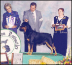 Gus taking Winners Dog (major pts) at the '96 MRC Specialty, handled by Rodger Freeman
