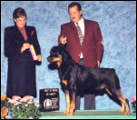 Gus taking Best of Breed, over top specials, at the Greater Muskegon K.C., on Nov. 8, 1996, handled by Rodger Freeman