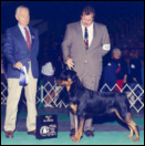 Gus and Rodger Freeman taking Winners Dog & Best of Winners, from the 9-12 month puppy class, in November 1994, at the Greater Muskegon K.C.
