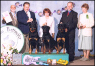 Gus (far left) taking the Stud Dog class at '98 MRC Specialty with his two sons, (On far right) Ch. Schwarzwalds Eazy Oddz Maker - Gus x Liesl