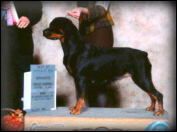 "Gus x Boni daughter, Ch. Quickfires Lola of RockyBay V Hlkn - ""Lola"" taking a BOS & WB"