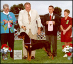 Gus x Shine son, taking 1st place sweepstakes at a Rottweiler specialty