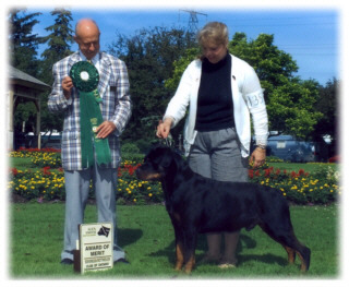 Am/Can Champion Rottihaus No More Mister Nice Guy CD, Multi-Award of Merit, Group Placements, & Best of Breed wins