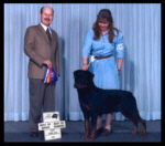 CKC - Best of Breed from the classes at Kent Kennel Klub in April 2003, judge Mr. Fransico Chapa, handled by Pat Turner