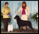 CKC - Winners Dog, Windsor All Breed Dog Club in March 2003, handled by Pat Turner