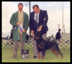 Best of Winners, Winners Dog, 1st Place 12-18 month dogs, Holland Michigan K.C. on May 25, 2001, handled by Rodger Freeman