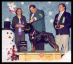 '02 Hoosier Rottweiler Club Specialty Winners Dog for 5pt major from the Am-Bred class, Indy Winter Classic Specialty Shows in IN, New AKC Champion on Feb. 8, 2002, handled by Rodger Freeman