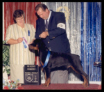 Reserve Winners Dog, 1st Place 6-9 month puppy dog, ARC Reg. Rottweiler Specialty at Lima K.C. in Ohio on July 2, 2000, handled by Rodger Freeman