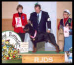 Best Junior Futurity Puppy & 1st Place 9-12 months Futurity, Medallion Rottweiler Club on Oct. 12, 2000, handled by Rodger Freeman