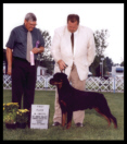 1st Place 6-9 month Sweepstakes, Northstar Rottweiler Club, St. Croix Valley Combined Specialties, MN, in Aug 2000, handled by Rodger Freeman