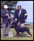 Reserve Winners Dog, 1st Place 6-9 month puppy dog at Northstar Rottweiler Club Specialty, St. Croix Valley K. C. in MN,  Aug 2000, handled by Rodger Freeman
