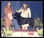 Best of Breed as a special at the Detroit K.C. on March 15, 2003, handled by Pat Turner