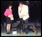 Best of Breed (2nd yr in a row) as a special at the Detroit K.C. on March 21, 2004, judge Ms. Fay Dorval Haupt, handler Roder Freeman