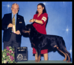 Best of Breed as a special at Genesee County K.C. on May 17, 2003, judge Dr. Gerald C. Penta, handled by Ms. Lynette Buford
