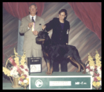 Best of Breed (back-to-back) as a special at Genesee County K.C. on May 18, 2003, judge Mr. James E. Taylor, handled by Ms. Lynette Buford