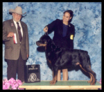 Best of Opposite Sex as a special, won over top 10 specials, at Kalamazoo K.C. on May 25, 2003, judge Mr. L. Moustakis, handler Ms. Lynette Buford