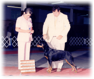 Liebs Kraus Von Baker, CD, ARC Bronze Dam of Multiple BIS/BISS Top 10 Champions, MRC Brood Bitch & Veterans Class Winner, MRC Honor Roll, AKC ptd., Best of Opposite Sex winner from the classes, Von Baker Rottweiler's foundation dam
