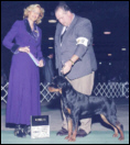Maddie at the Ingham Co K.C., taking Winners, from the 9-12 month puppy class, handled by Rodger Freeman, under Judge Mrs. Patti Widick Neale, on 11-28-05