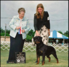 """Maddie"" with handler Norma Smith taking Best of Opposite Sex, Winners Bitch (major), and finishing her AKC Championship at the Holland MI K.C."