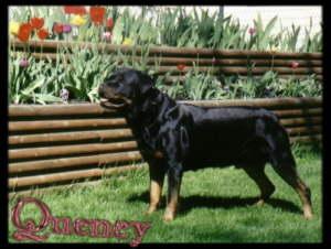 Quency
