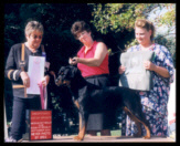 Tory at the 2001 ARC Regional VII Specialty in Gray Summit, Missouri taking Best of Opposite Sex in Sweepstakes on Sept. 21, 2001, handled by Mrs. Kimm McDowell, under Breeder-Judge Victoria Weaver of Gamegards Rottweilers