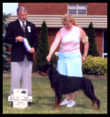 Tory in Canada at the Sarnia K.C. taking BOS and becoming a new CKC Champion in only four shows in July 2003, handled by Ms. Pat Turner