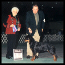 Tory at the Detroit K.C. on March 16, 2003 taking Best of Winners, handled by Mr. Rodger Freeman