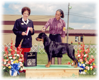 V-3 Rated, American, Canadian Champion Worthy's Crown Victoria Von Baker, Multi-Best in Sweepstakes & Best of Breed Winner, Group Placer