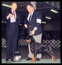 Tory at the Oakland County K.C. on Jan. 19, 2003 taking BOS & BOW, handled by Mr. Rodger Freeman